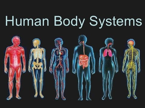 Course Title: Recognise healthy body systems