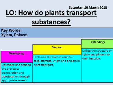 Transport in plants lesson