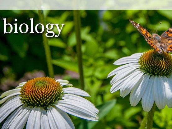 Year 10 Biology - Bioenergetics