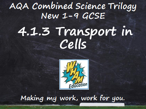 AQA Combined Science Trilogy: 4.1.3 Transport in Cells