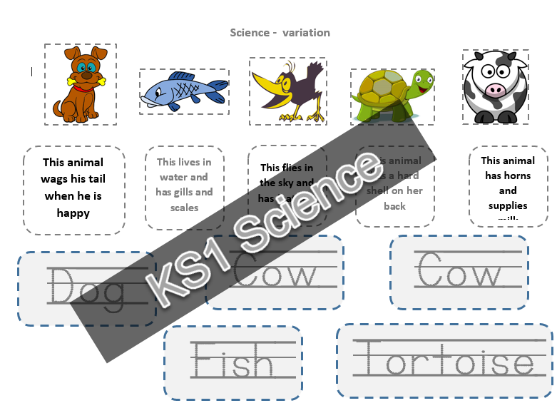KS1 Variations of animals 1 page activity