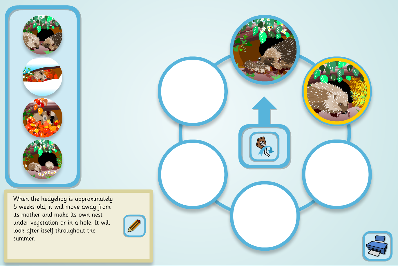 A Hedgehog's Year Lifecycle Sequencer (Complex) - KS2 Literacy
