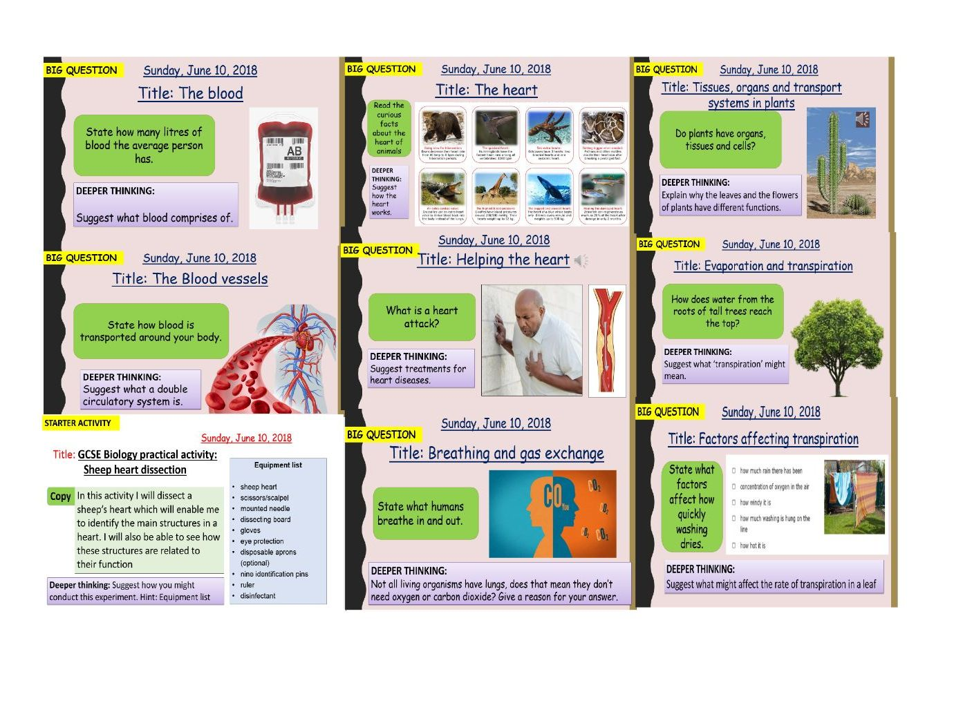 AQA new specification-B4-Organising animals and plants-complete bundle