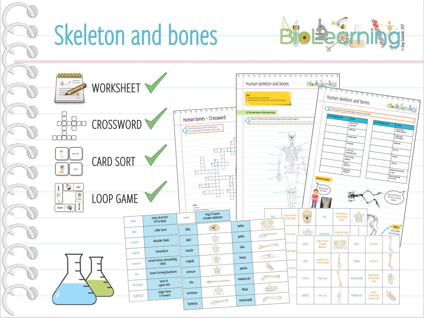 Skeleton And Bones Worksheet Ks2ks3 By Anjacschmidt Teaching