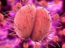 Bacteria, Fungi and Protists AQA Trilogy new spec