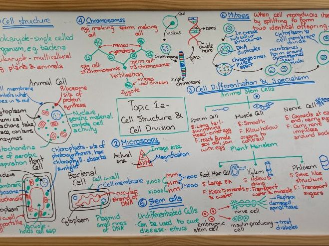 AQA GCSE Combined Science Trilogy - Biology Revision Mats