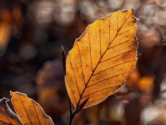 Autumn Leaves Writing + Colouring, KS1