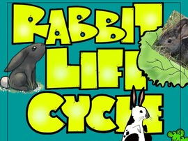 STEM - Be a Rabbit Detective - Life Cycle, Biomimicry, Inspiration for Ideas