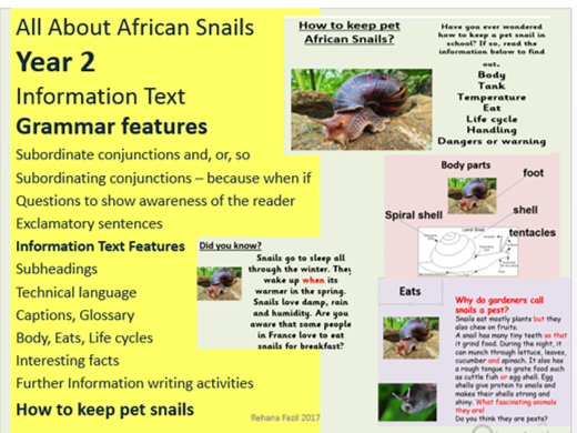 Year 2 Information Text African Snails