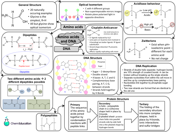 Revision mindmap for AQA A level amino acids and DNA (new topic for 2016 spec)