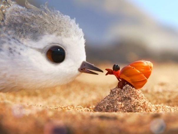 ESL - Based on the Short Film PIPER (by Disney Pixar)
