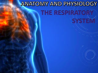 AQA A Level PE Anatomy and Physiology (Respiratory System) Powerpoint