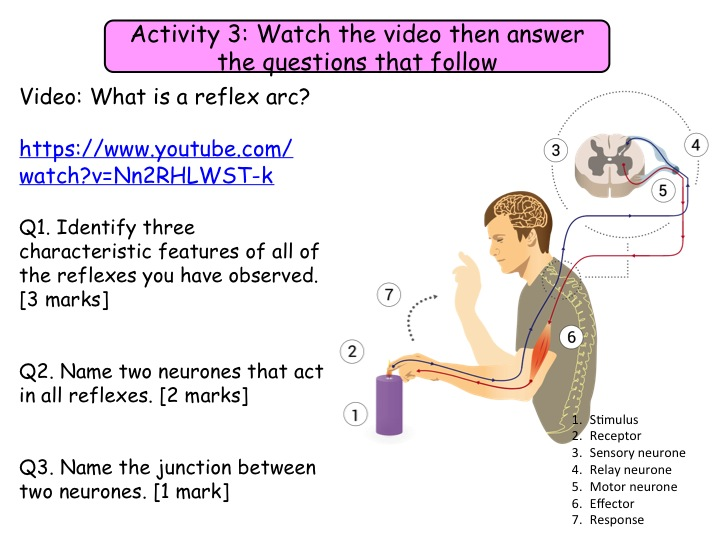10.3 and 10.4 Reflex actions and the brain NEW GCSE Biology specification