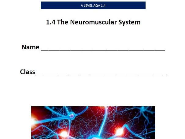 New AQA A Level. 1.4. The Neuromuscular System - Pupil Workbook.
