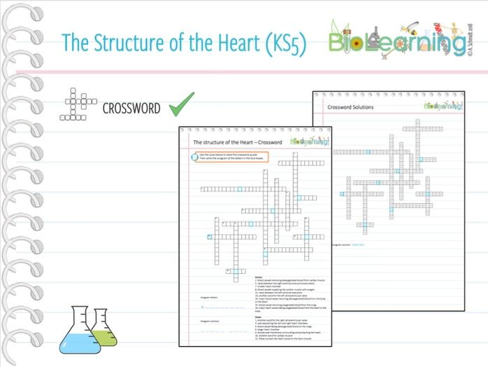 Structure of the Heart - Crossword (KS5)