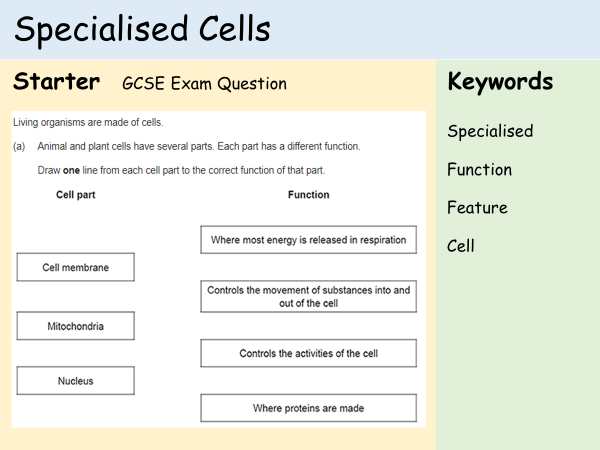 Cells lesson ks3