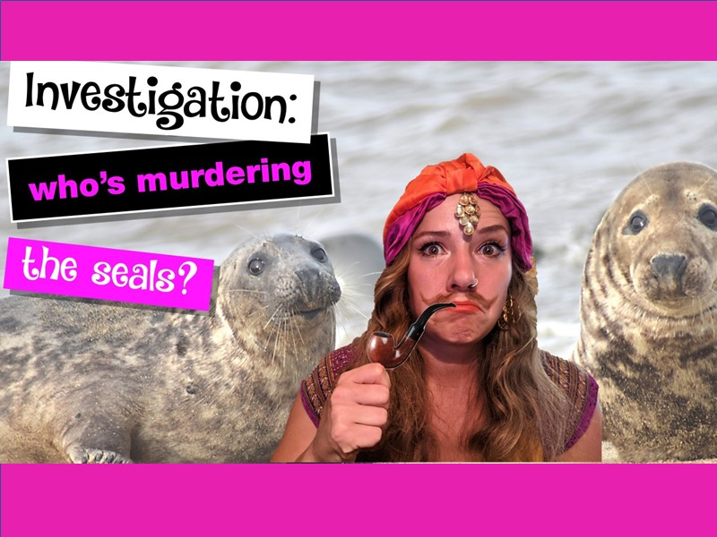 INVESTIGATION: Who's murdering the seals?