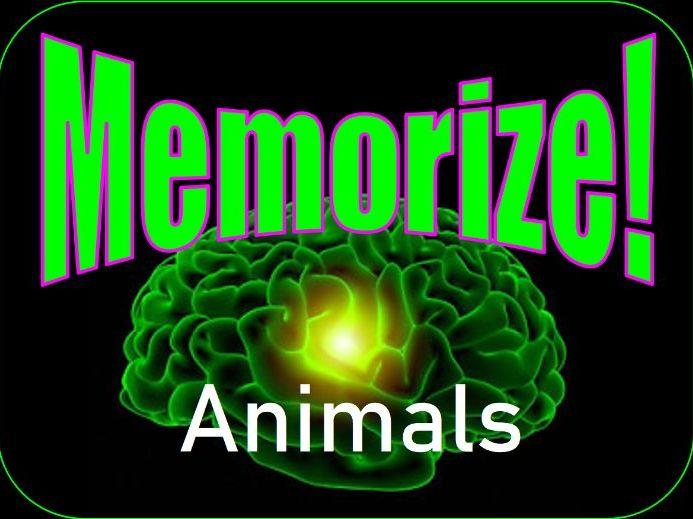Animals Memorize Game - Kindergarten Fun - Grade K-1 - PowerPoint