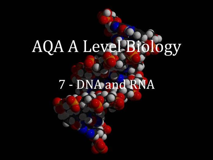 AQA A Level Biology Lecture 7 - DNA and RNA