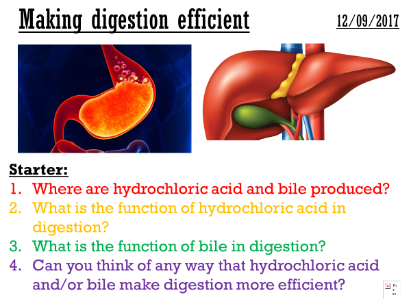 Making digestion efficient - complete lesson (GCSE 1-9)