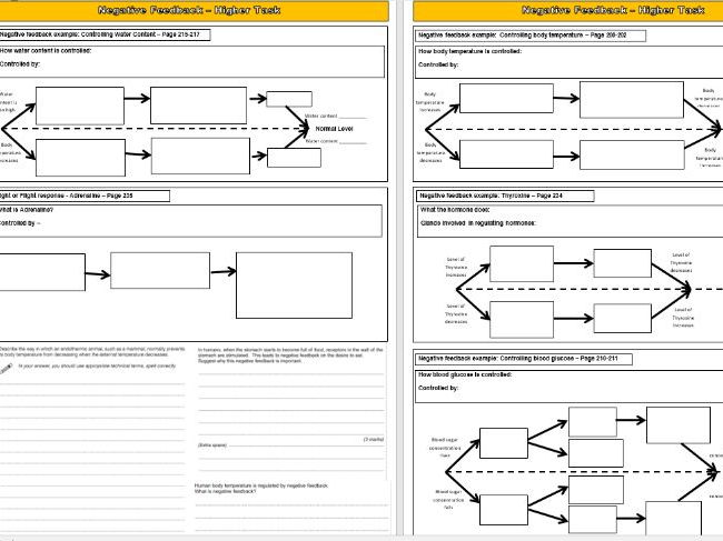 Negative Feedback Overview GCSE Activity - 3 x Differentiated Sheets