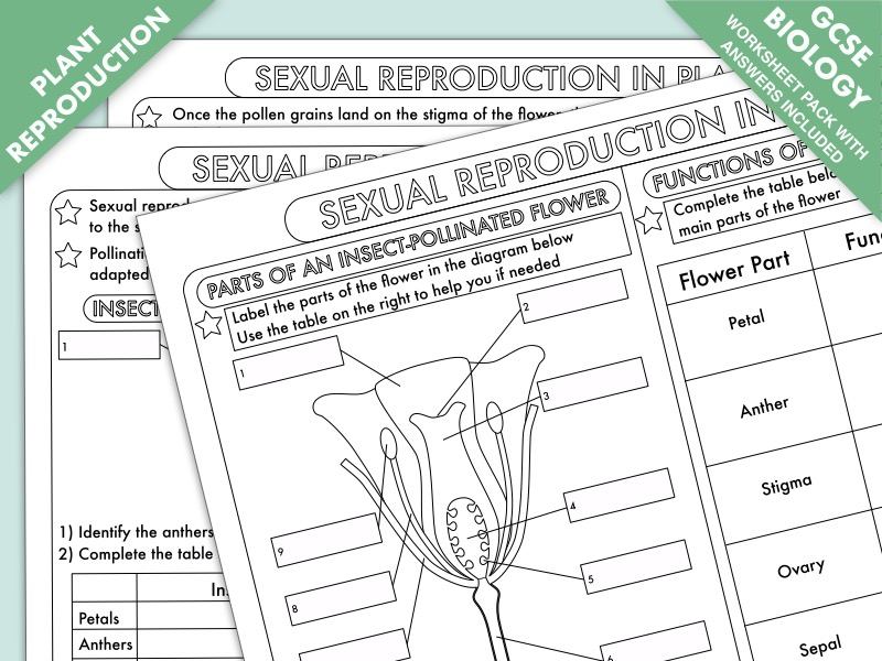 Gcse Biology Plant Reproduction Worksheet Pack By Beckystoke