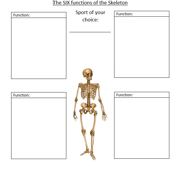 skeletal and muscular system worksheet pdf