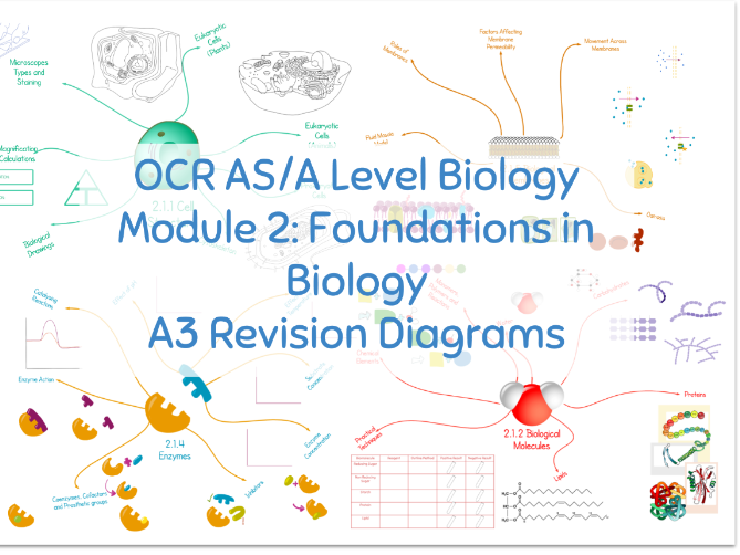 OCR AS/A Level Biology Revision: Module 2: Foundations in Biology A3  Diagrams