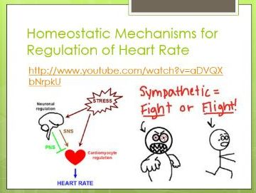 BTEC Level 3 Health and Social Care : Unit 5 (Anatomy and Physiology) - Homeostasis