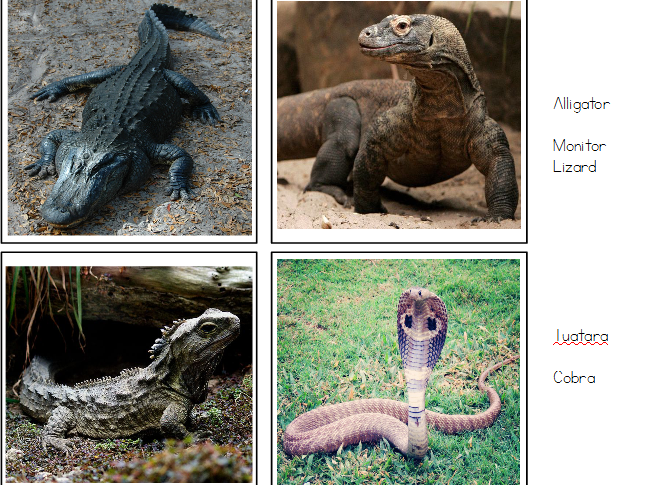 Reptiles - Matching Cards