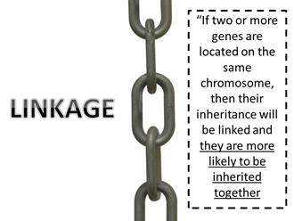 Autosomal Linkage