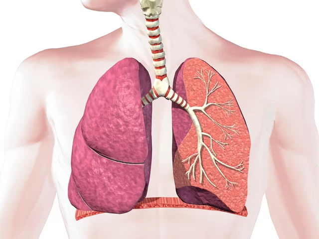GCSE PE || Respiratory System - Work-book & PowerPoints