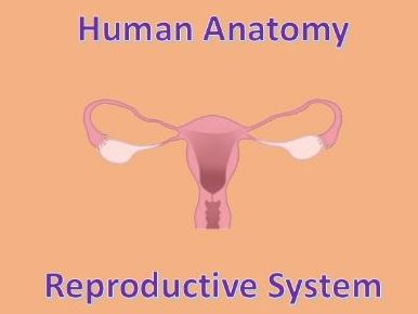 Human Anatomy Quiz: Reproductive System