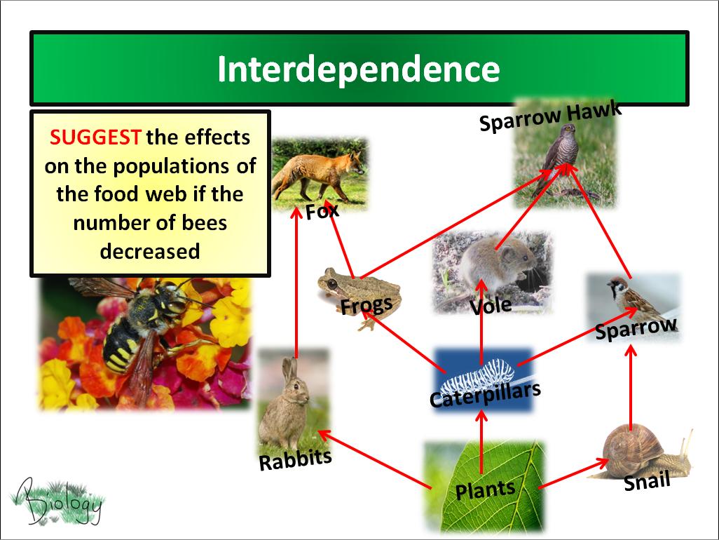 AQA Activate 9.1 - Interdependence
