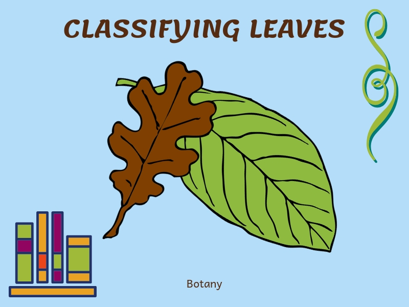 Classifying Leaves