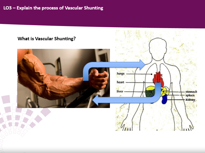 Blood Distribution and Vascular Shunting