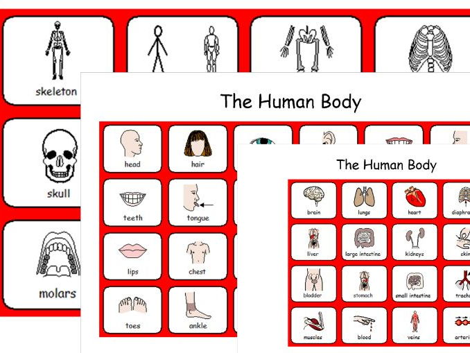 The Human Body - Facial features, Organs, Skeleton - 3 Symbol Sheets - SEN and Lower Ability
