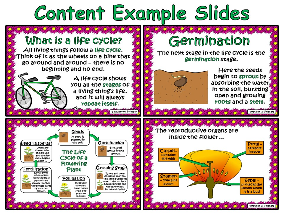 The Life Cycle of a Flowering Plant - PowerPoint and worksheet by ...