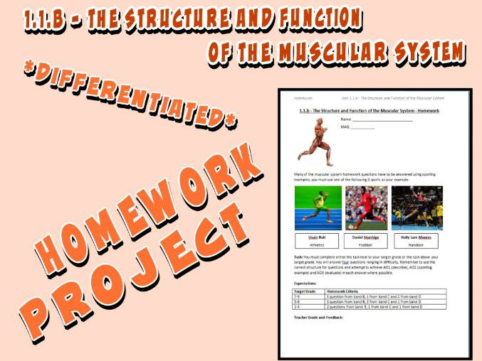 OCR GCSE PE 9-1 (2016) 1.1.b - Homework Project - The Structure and Function of the Muscular System