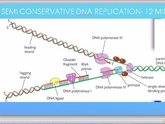 DNA replication and the Semi-conservative model