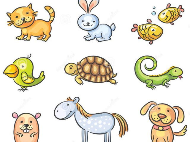 French pets / les animaux domestiques presentation for younger children.