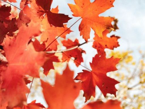 Autumn Landscape-3 Page Borders