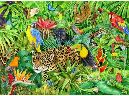 Set of  literacy resources based on the  Amazon Rainforest / Conservation Issues for Years 5 / 6