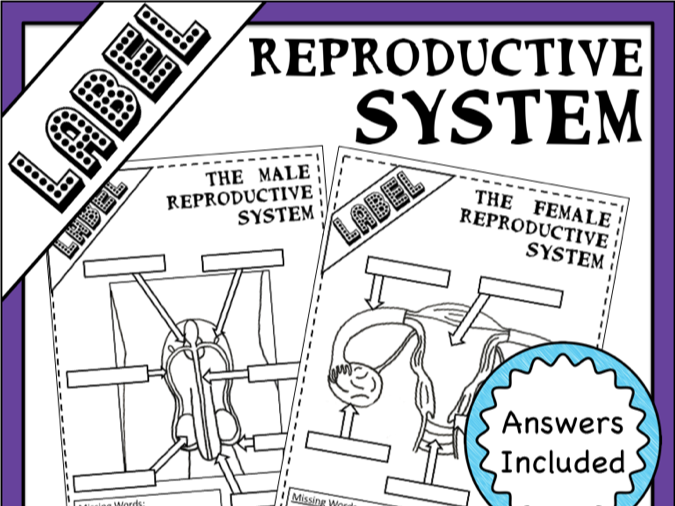 Label Reproductive Systems (Male and Female)