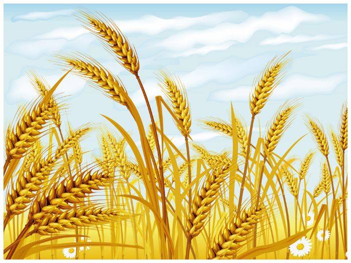 wheat powerpoint template by templatesvision