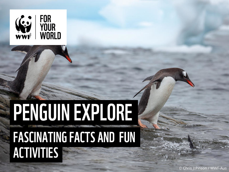 All about Penguins - WWF Explore Activity Poster