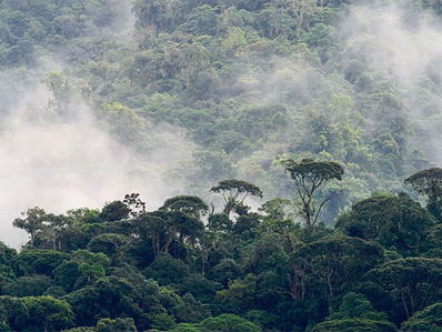 AQA GCSE Geography The Living World - Rainforests