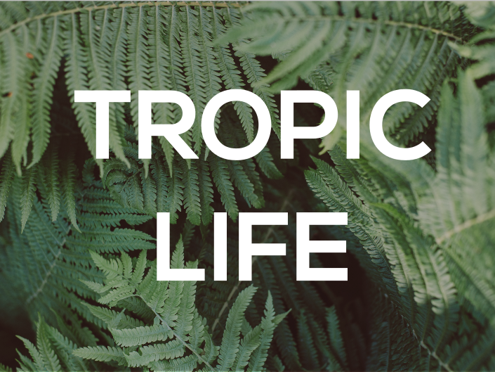 Revision Resource Collection I Tropic Life