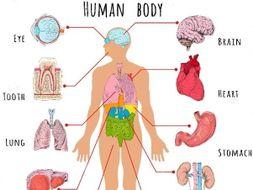 KS3 Unit 7A Biology- Organs WORKSHEETS ONLY
