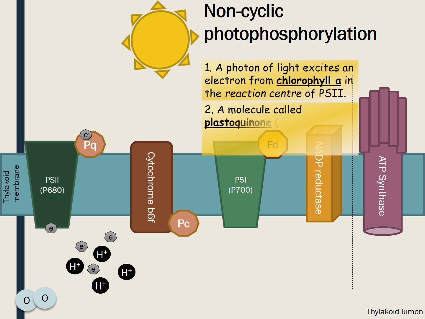 5.2.1 Photosynthesis
